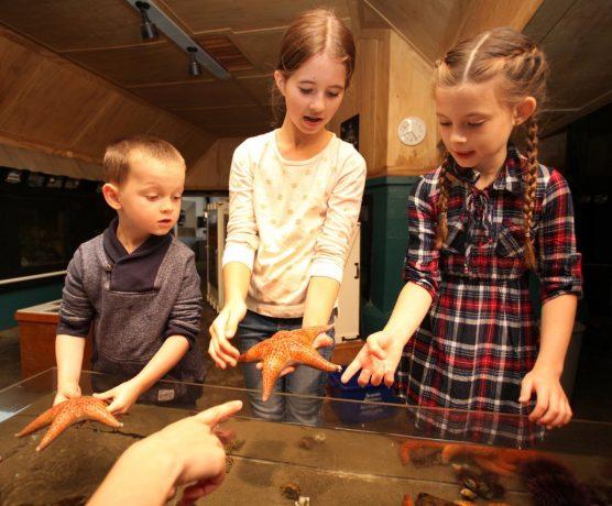 Seaside Aquarium Oregon Coast Attractions
